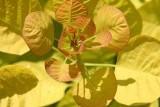 Golden Spirit / Голден спирит
