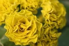 Forest Lemon / Форест Лемон