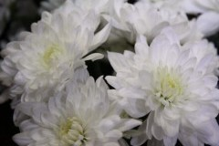 Baltica White / Балтика Уайт